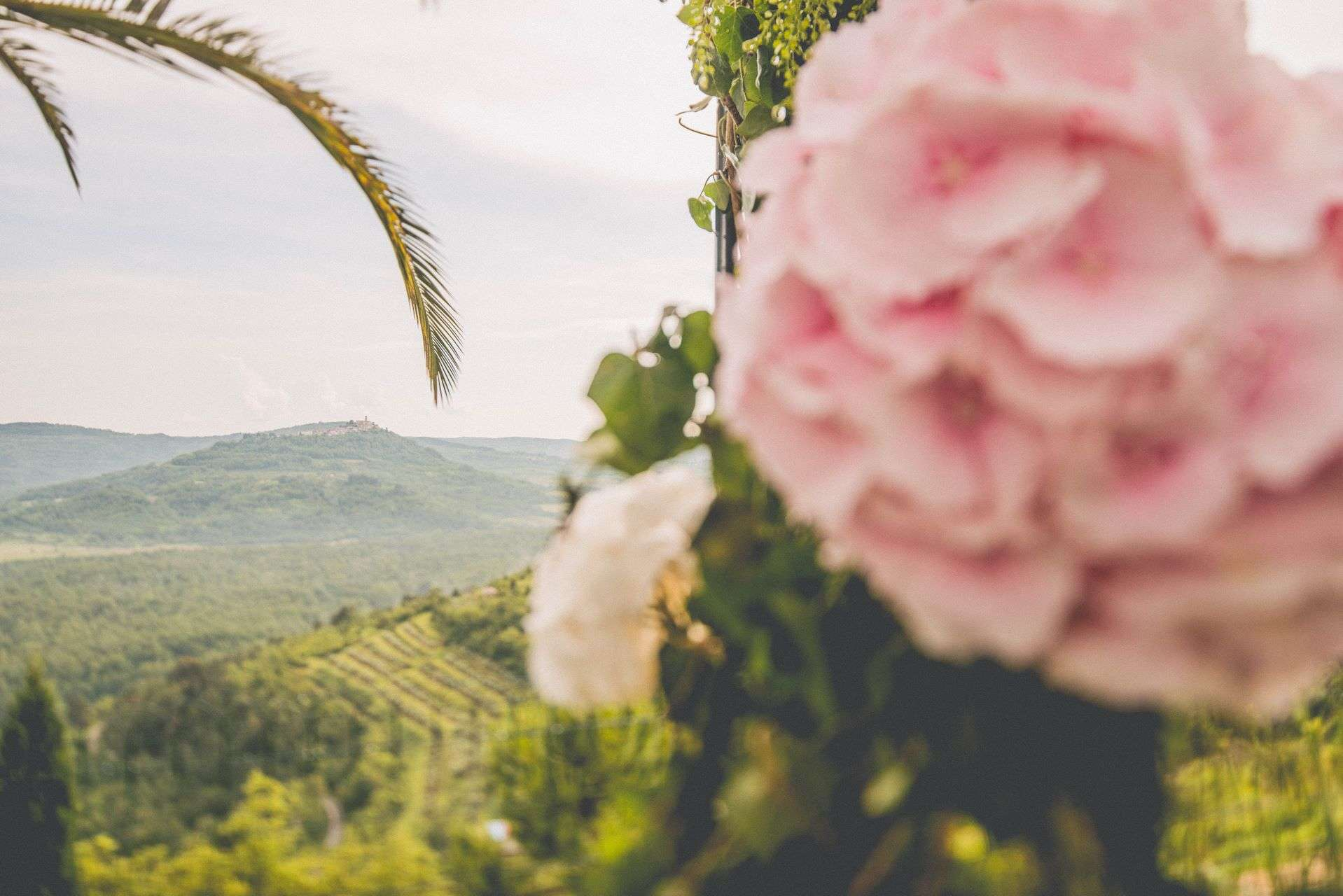 wedding-photographer-istria-motovun-008